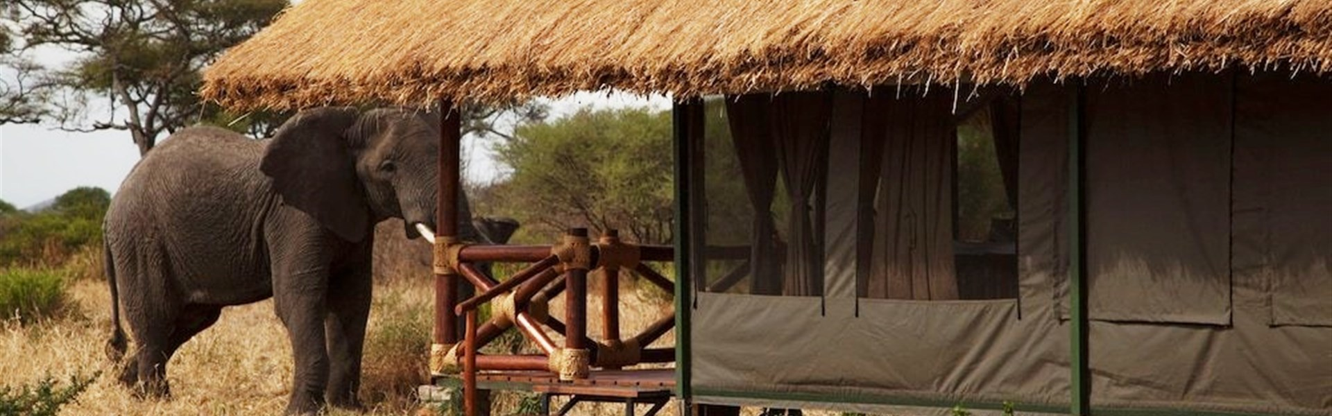 Marco Polo - Simba Lodge Tarangire -