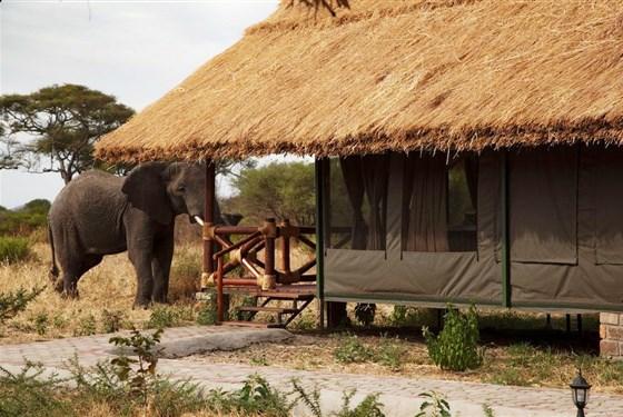 Marco Polo - Simba Lodge Tarangire -