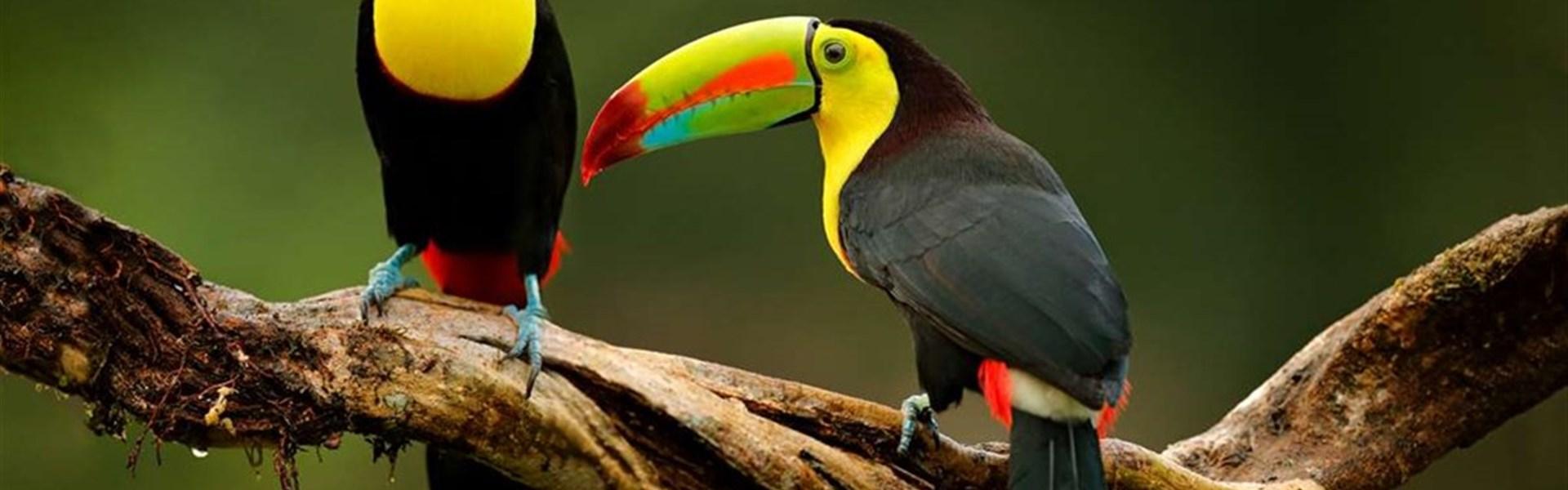 Kostarická odysea - od Pacifiku ke Karibiku -