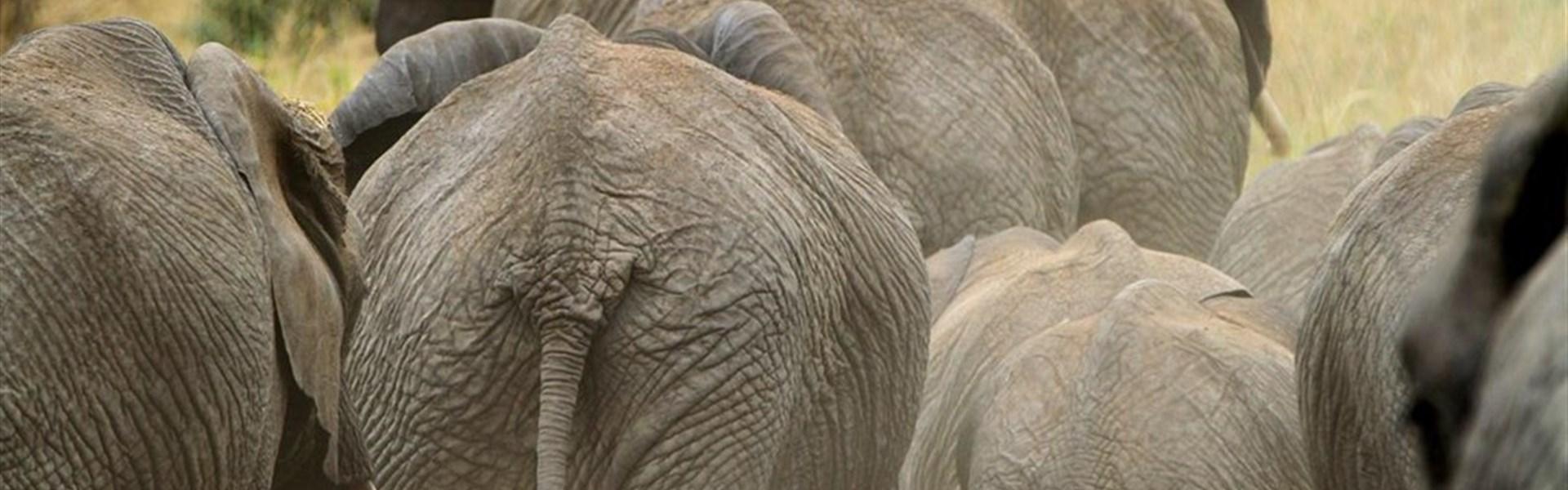 Safari v Tsavo West a pobyt u moře - 3 noci safari a 7 nocí moře. -
