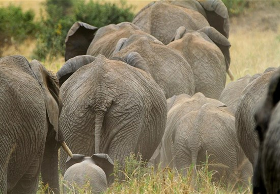 Safari v Tsavo West a pobyt u moře - 3 noci safari a 7 nocí moře. - Afrika