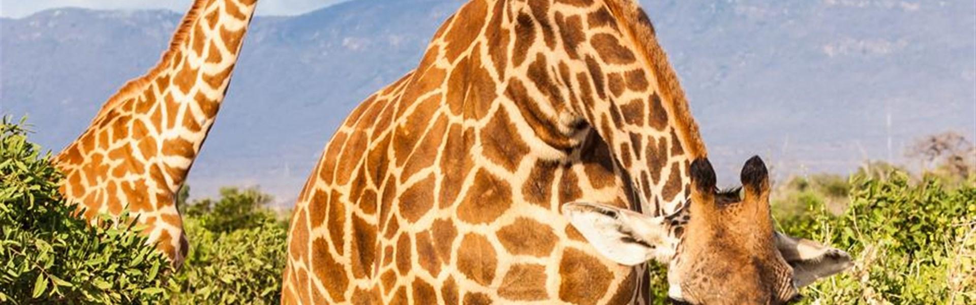Léto u moře v Keni + 2 noci na safari -