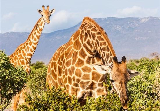 Jarni prazdniny v Keni - 2 noci safari a 5 nocí u moře - Afrika -