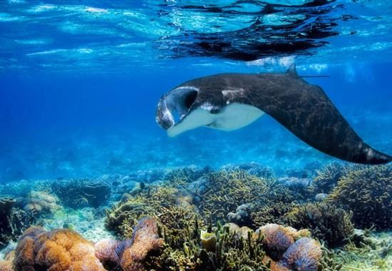 Furaveri Maldives - Indický oceán