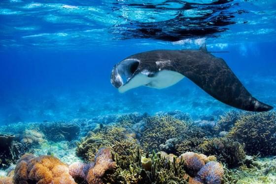 Marco Polo - Furaveri Maldives -