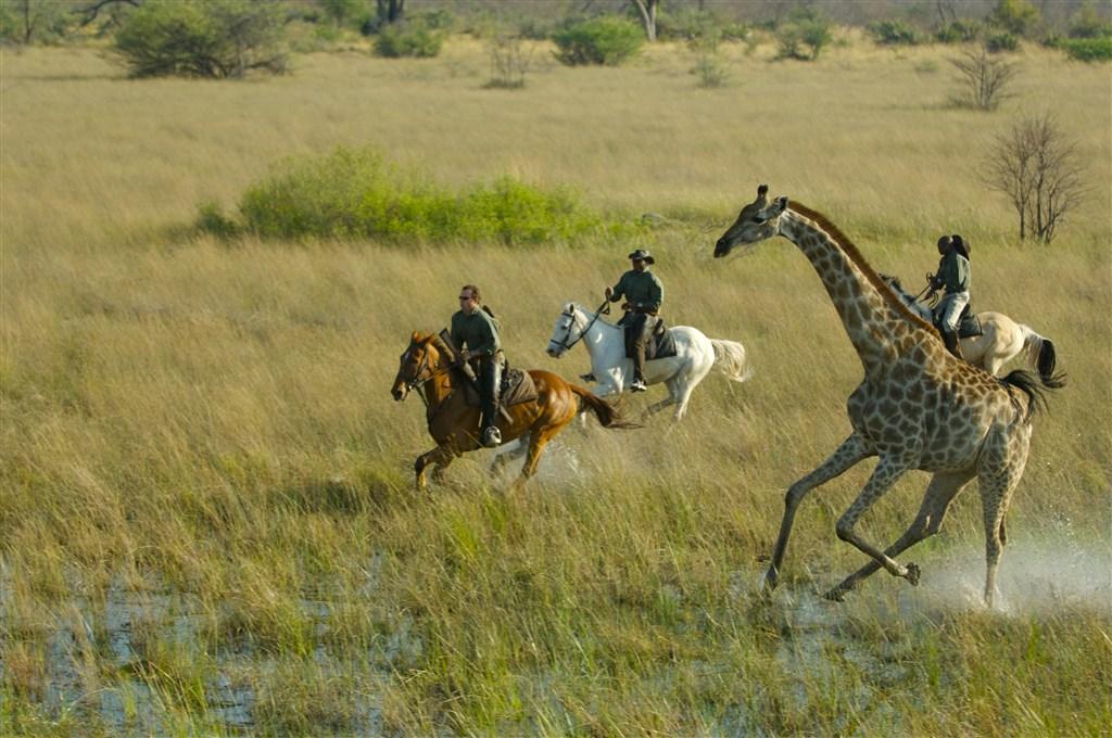 aktivní dovolená, treky, koně