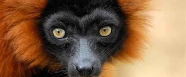 Madagaskar -