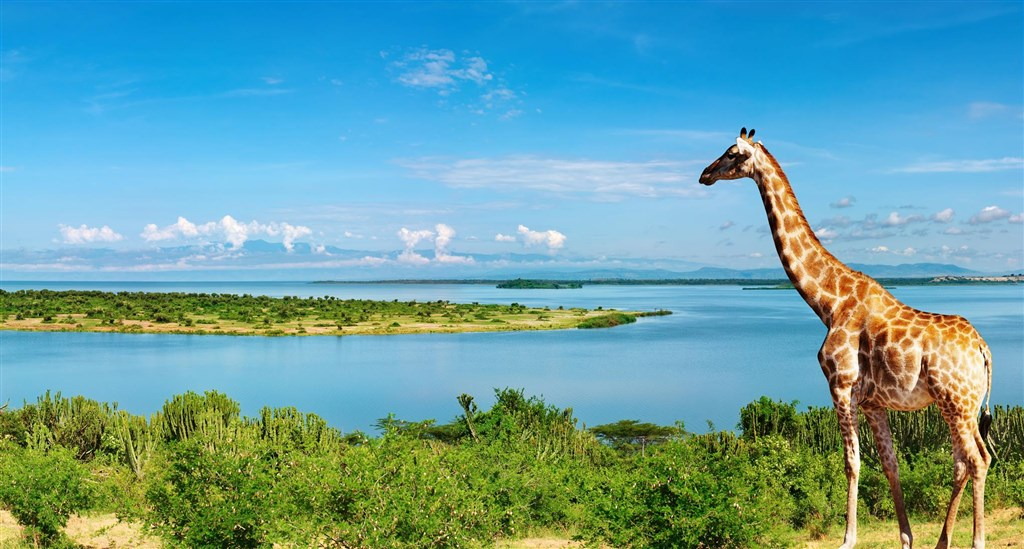 Uganda - nejen za gorilami s anglickým průvodcem -