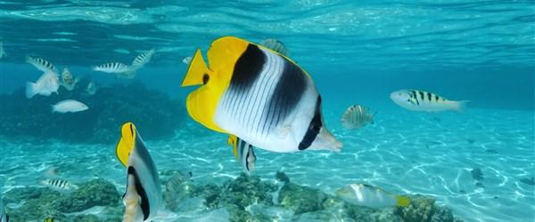 potápění a šnorchlování