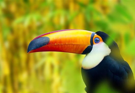 Příroda a pláže Kostariky Fly & Drive - Kostarika -