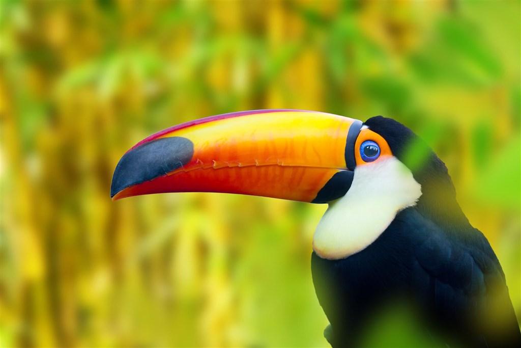 Příroda a pláže Kostariky Fly & Drive - Tchaj-wan