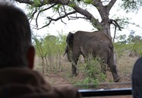 Náklaďákem na safari do Krugerova NP