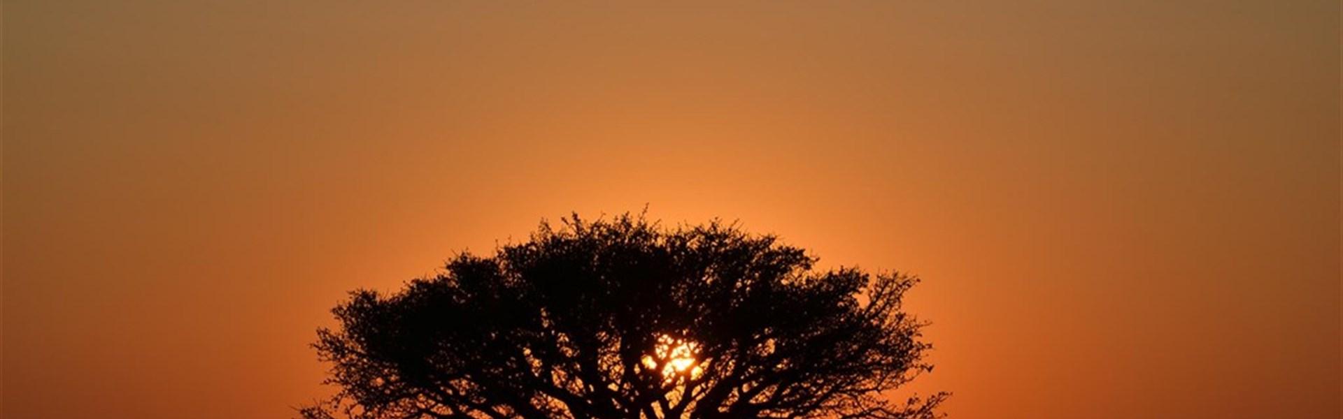 Na safari do Botswany s českým průvodcem -