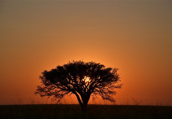 Na safari do Botswany s českým průvodcem - Afrika -
