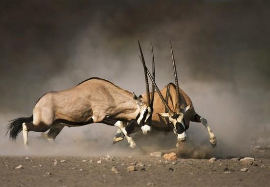 Namibie - barvy pouště s anglickým průvodcem - Namibie -