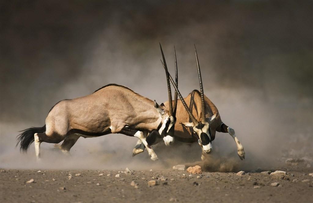 Namibie - barvy pouště s anglickým průvodcem -