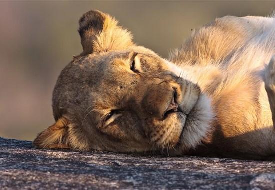 Náklaďákem na safari do Krugerova NP -  -