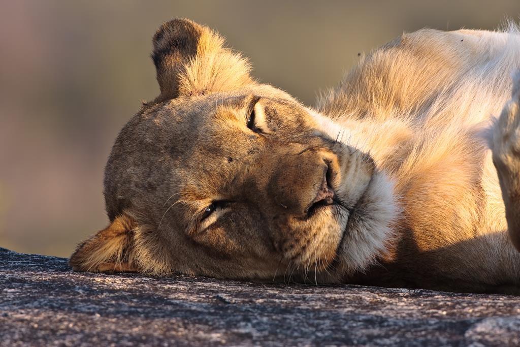 Náklaďákem na safari do Krugerova NP