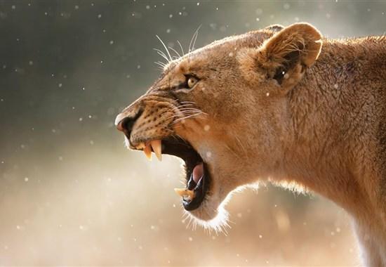Poznávací zájezd - Safari v JAR českým průvodcem - Jihoafrická republika -