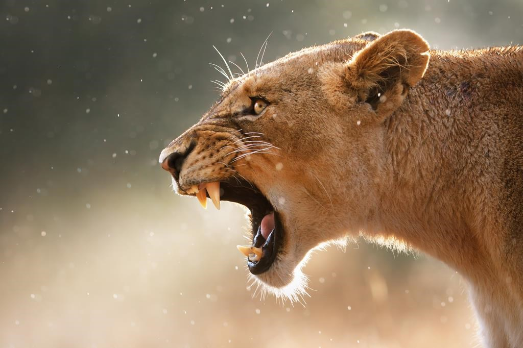 Safari v Jihoafrické republice s českým průvodcem - Salvador